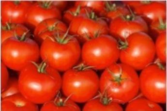 Tomaten, 500gr